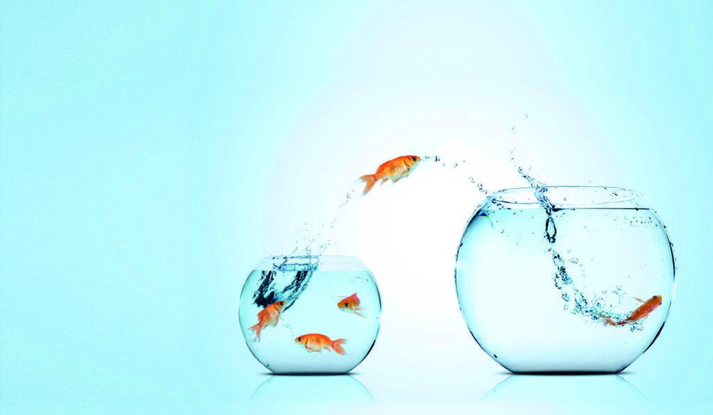 hengitysliitto ry kalakuva